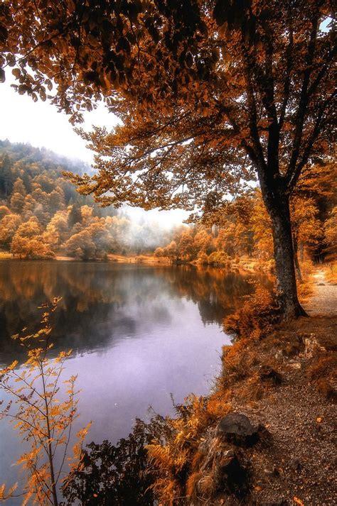 fog  coming autumn   autumn scenery autumn fall