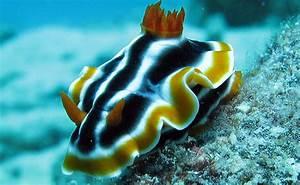 Scuba Dive On Australia U0026 39 S Great Barrier Reef