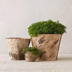 Birch, Tapered, Flower, Pot
