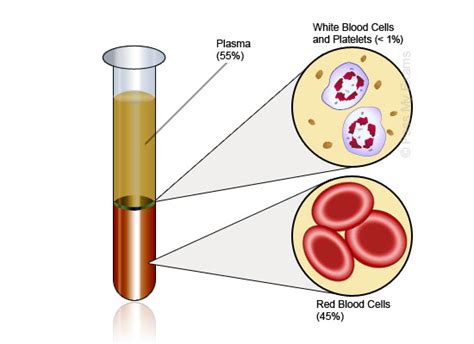 which blood component gives blood its color components of blood cardiovascular system pass my exams