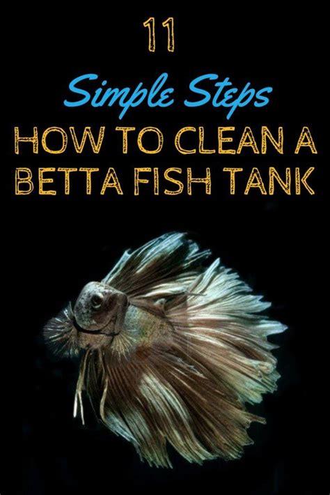 how to clean a fish tank best 25 betta fish tank ideas on pinterest