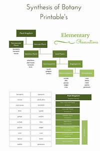 Elementary Observations  Botany  U0026 Classifying