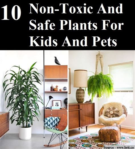 10 non toxic and safe plants for and pets home and