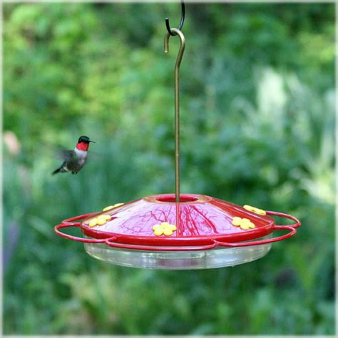 pets hummingbird feeders pet oasis hummingbird bird feeder 16 oz 221