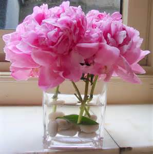 peony the secret language of flowers
