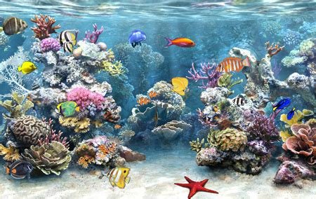 awesome scenes  underwater creature wallpapers