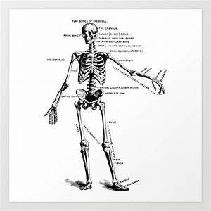 Human Skeleton Anatomy Drawing Diagram Art Print By