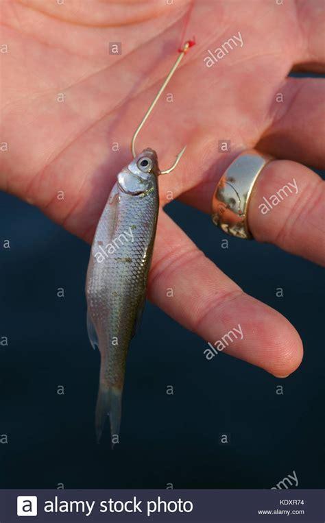 crappie fishing stock  crappie fishing stock