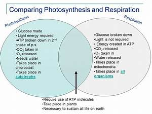 The Venn Diagram Compares Aerobic Respiration And