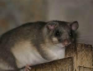 machen hamster winterschlaf welche tiere halten winterschlaf