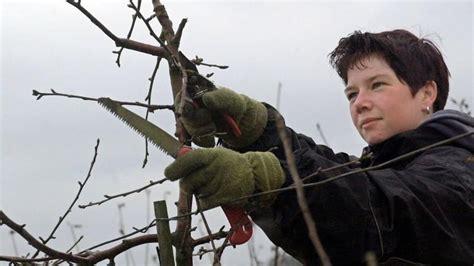 apfelbaum schneiden zeitpunkt obstbaumschnitt der richtige zeitpunkt zum apfelbaum und