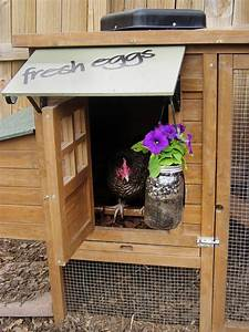 Chicken Coops For Backyard Flocks