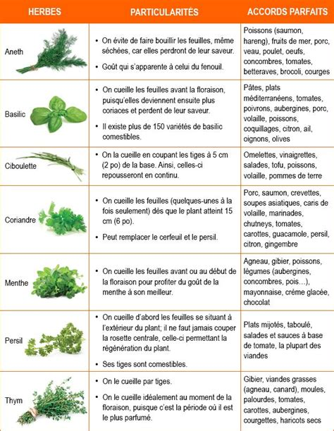 les herbes de cuisine les 25 meilleures idées concernant herbes aromatiques sur