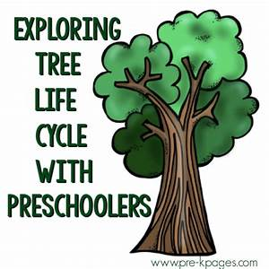 Exploring The Life Cycle Of Trees And Flowering Plants