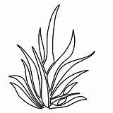 Grass Coloring Pages Drawing Plants Seaweed Clipart Outline Simple Colouring Template Tall Thrives Growing Lemon Sheet Clip Sketch Lawn Templates sketch template