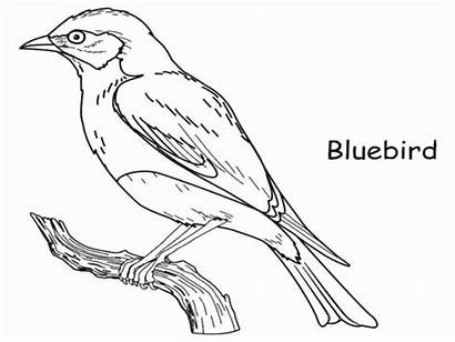 Coloring Bird Bluebird Pages Drawing Outline Robin