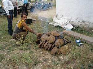 Cow dung for cooking | I will call you Mr. Kathmandu