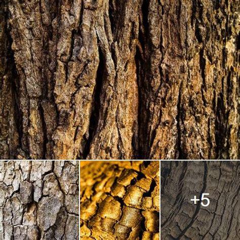 รูปภาพฟรี ต้นไม้ พื้นหลังเนื้อไม้ Wood Tree Texture ...