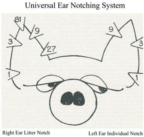 Swine Ear Notching Diagram