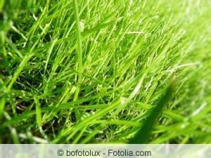 Pilze Im Rasen Was Kann Ich Dagegen Tun by Im Rasen Wachsen Braune Pilze Was Tun Bei Pilzbefall