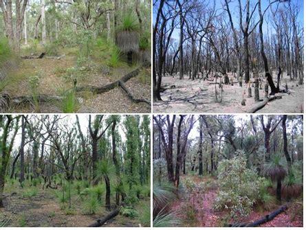 forestcheck parks  wildlife service
