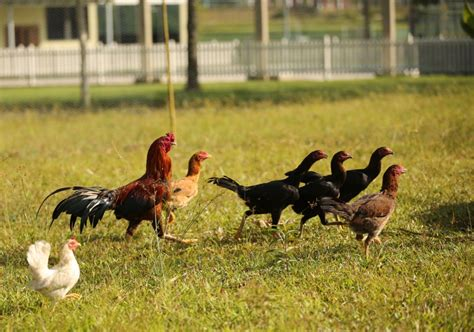 barton farm marlborough college malaysia