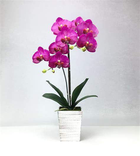 ดอกกล้วยไม้ฟาแลนนอฟซิสสี Dark lavender จัดในกระถางไม้สีขาว