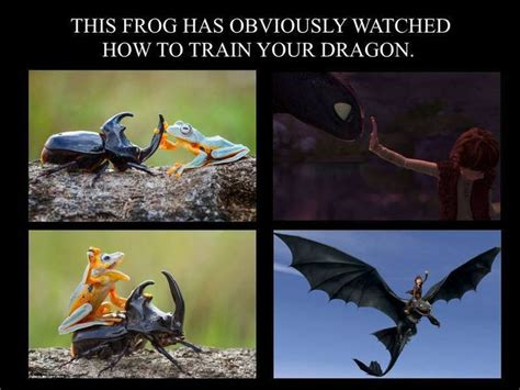 How To Train Your Dragon Memes - pin by lindy kwok on animals 3 pinterest dreamworks hilarious and hilarious stuff