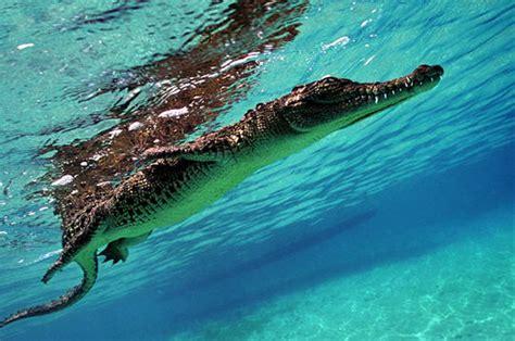 l internaute cuisine crocodile marin 8 photos du livre quot planète mers quot