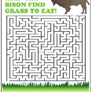 amazing animal mazes st grade worksheets educationcom