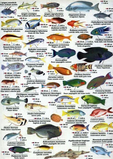 indian ocean fish wwwfishinaddictcom fish pinterest
