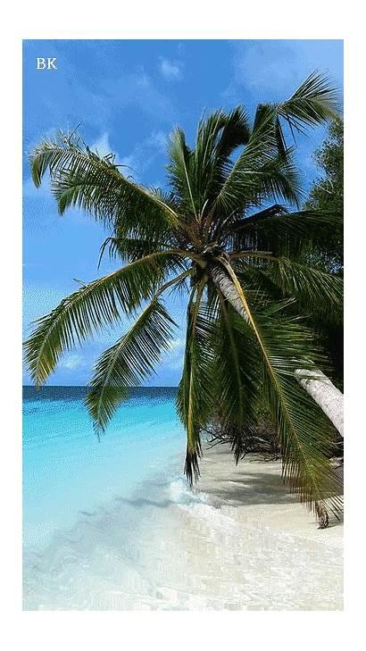 Tropical Phoneky Nature