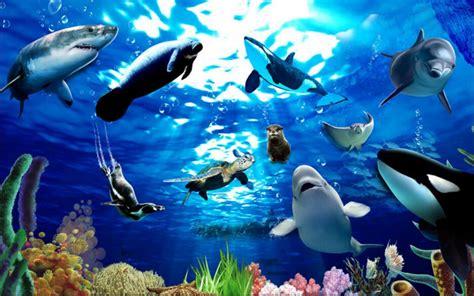 kumpulan gambar laut  indah
