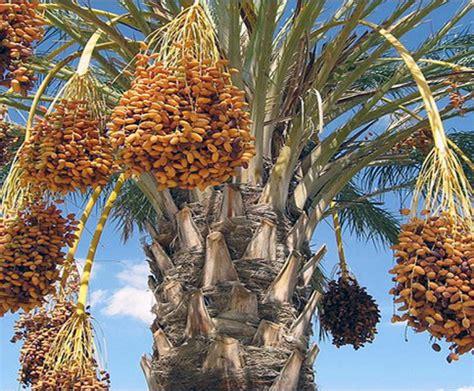 arabian peninsula  yalla blog