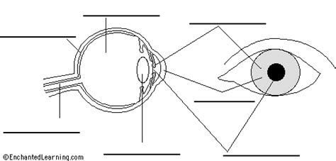 Eye Diagram To Label Kifd by Label Eye Printout Enchantedlearning