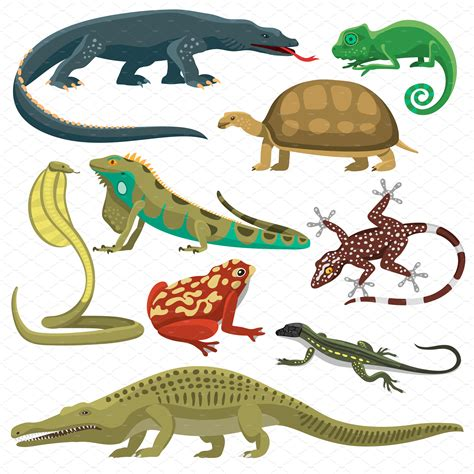 Reptile and amphibian vector set ~ Illustrations