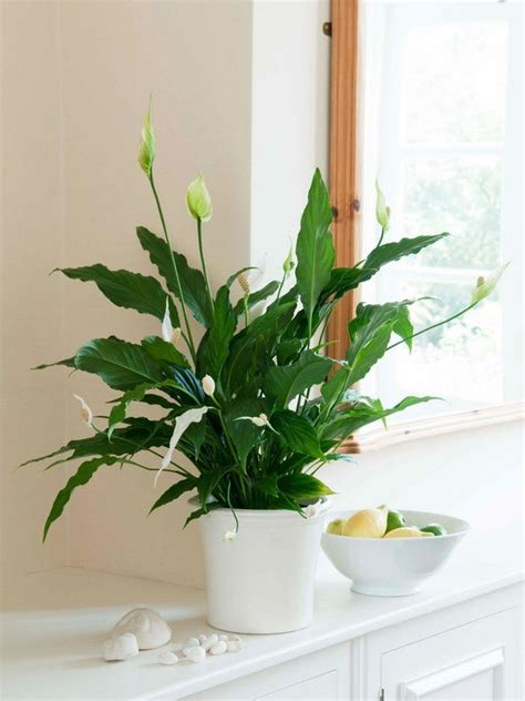 easy flowers to grow indoors a useful guide for indoor gardening