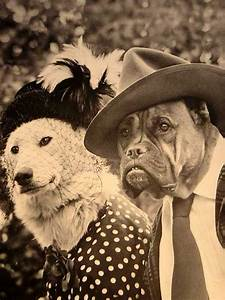 Funny, Vintage, Animal, Pics