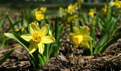 Kādu laiku prognozē aprīlī - Sulu, Ūdeņu un Putnu mēnesī?