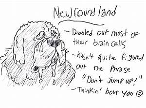 Illustrator Draws Hilarious Guide to Different Dog Breeds