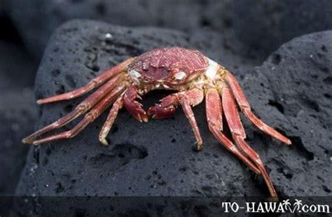 crabs decapod crustaceans