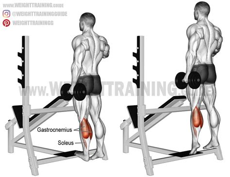 chair leg raises muscles best 20 calf anatomy ideas on