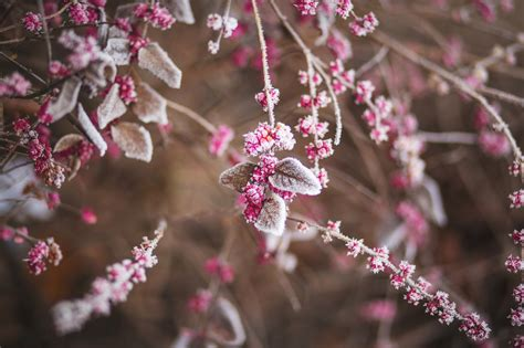 eisheilige  der frost bleibt aus bergwelten
