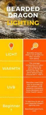 Bearded Dragon Heat Lamp by The Ultimate Bearded Dragon Lighting Guide Bearded