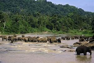 Elephant Behavior - Animal Facts and Information