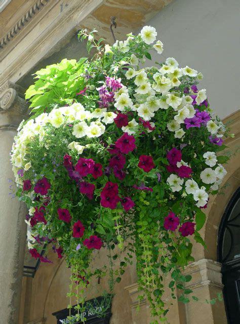 Hängende Blumen Für Balkonkästen by Saturday Inspiration Hanging Basket House Gardening