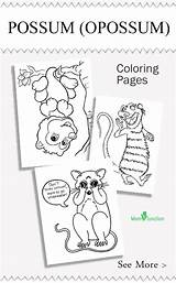 Coloring Opossum Pages Printable Animal Possum Sheets Momjunction Animals Colouring Nocturnal Craft Activity Favorite Zoology Activities sketch template