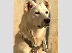 Hunderassen Hunde nach dem Kriterium Größe großer Hund