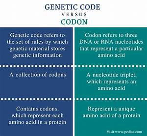 difference between genetic code and codon definition With difference between template and coding strand