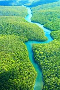 Amazon Rainforest in Brazil; one of our guides said that from the air ...